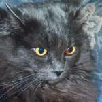 Schwarze Katz Foto
